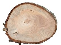 Spruce cross cut wood texture with defects. Such as resin pocket, some cracks and knots isolated on white stock images