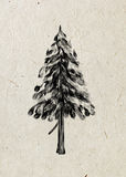 Spruce. Drawing tree on a beige rice paper. Stock Photos