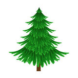 Spruce, Evergreen Tree, Element Of A Landscape. Colorful Cartoon Vector Illustration Royalty Free Stock Images