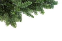 Spruce Fir Border Royalty Free Stock Photo