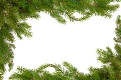 Spruce Fir Pine Border Stock Photos