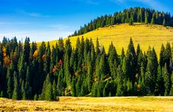 Spruce forest around the hill in autumn. Beautiful nature scenery. clean environment concept. azure sky with few clouds Stock Photography