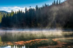 Spruce forest on the bank of boiling lake. At sunrise in autumn Stock Photography