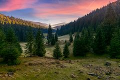 Spruce forest in foggy valley at reddish sunrise. Beautiful autumn landscape in mountains. Apuseni Natural Park, Romania stock photos