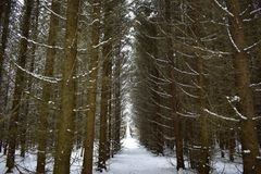 Free Spruce Forest Gloomy Coniferous Branches Bent Over The Path In The Forest Forest Path Forest Path Dirt Royalty Free Stock Images - 164714079