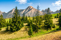 Spruce forest on grassy hillside in tatras. Composite summer landscape with spruce forest on grassy hillside in High Tatra Mountains Royalty Free Stock Images