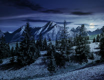 Spruce forest on grassy hillside in tatras at night Stock Photos