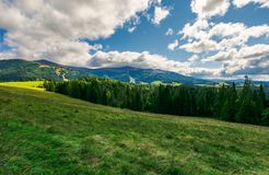 Spruce forest on the grassy meadow. Lovely autumn landscape. spruce forest on the grassy meadow. beautiful mountain ridge in the distance. wonderful cloudscape Royalty Free Stock Photography