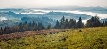 Spruce forest on a hill side in fog. Spruce forest on mountain hill side in fog on sunrise stock images