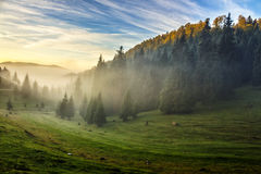 Spruce forest on a hill side in fog. Spruce trees in fog on hill side meadow under the blue sky before sunrise stock image