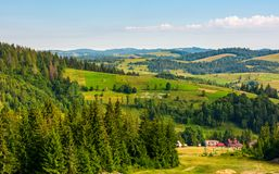 Spruce forest on hills in countryside area. Lovely summer landscape Royalty Free Stock Photo