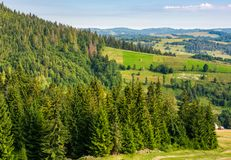 Spruce forest on hills in countryside area. Lovely summer landscape Stock Photography