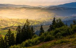 Spruce forest on hills at foggy sunrise Royalty Free Stock Image