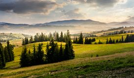 Spruce forest on hills at foggy sunrise Stock Images