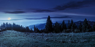 Spruce forest on hillside at night Royalty Free Stock Photo