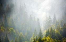 Spruce forest on hillside in smoke. Lovely nature disaster background Stock Images