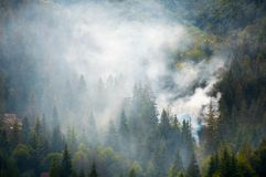 Spruce forest on hillside in smoke. Lovely nature disaster background Stock Image