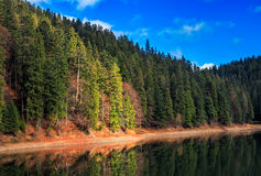 Spruce forest on the lake in mountains Stock Images