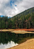 Spruce forest on the lake in mountains Royalty Free Stock Images