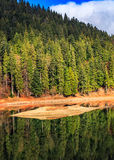 Spruce forest on the lake in mountains Stock Photography