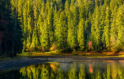 Spruce forest with lake at sunrise Stock Photo