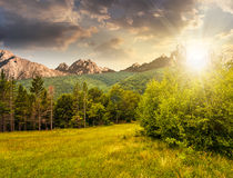 Spruce forest on a meadow in Tatras at sunset Stock Photos