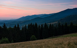 Spruce forest in mountain at dawn Stock Images