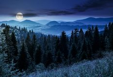 Spruce forest in mountains at night. In full moon light. lovely summer landscape Royalty Free Stock Images