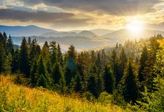 Spruce forest in mountains at sunset Stock Photos