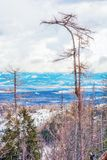 Spruce forest after natural disaster in High Tatras. Mountains, Slovak republic. Winter natural scene. Vivid photo filter royalty free stock images