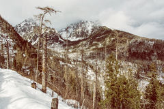 Spruce forest after natural disaster in High Tatras mountains, y Royalty Free Stock Photos