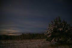 Spruce forest night snow stars Stock Photos