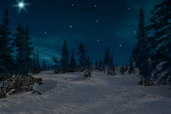 Spruce forest night snow stars. Night scene with snow-covered christmas trees in winter forest on the background of stars and sky Royalty Free Stock Image