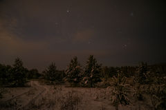 Spruce forest night snow stars Royalty Free Stock Photography