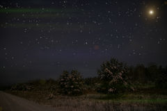 Spruce forest night snow stars Royalty Free Stock Images