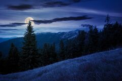Spruce Forest On The Hillside Meadow At Night Royalty Free Stock Image