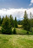 Spruce forest on rolling hills. Beautiful springtime landscape in mountainous area Stock Images