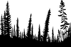 Spruce forest royalty free illustration