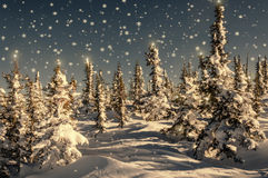 Spruce forest snow snowflakes stars. Colorful winter scene with snow-capped christmas trees in the forest, snowdrifts, falling snow and stars on the spruce Royalty Free Stock Image