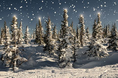 Spruce forest snow snowflakes stars Royalty Free Stock Photos