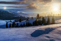 Spruce forest on snowy meadow in high mountains. Day and night concept image of spruce forest on a meadow full of snow in mountains Royalty Free Stock Photos
