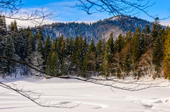 Spruce forest on snowy meadow in high mountains. Spruce forest on a meadow full of snow in mountains on a sunny winter day Stock Photography