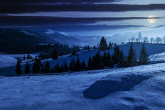 Spruce forest on snowy meadow in high mountains at night. Spruce forest on a meadow full of snow in mountains at night in full moon light Royalty Free Stock Photo