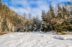 Spruce forest on snowy meadow in mountains. Spruce forest on a meadow full of snow in mountains. beautiful landscape in good weather on a sunny winter day Stock Photo