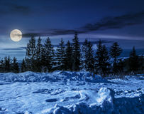 Spruce forest on snowy meadow at night Royalty Free Stock Photography