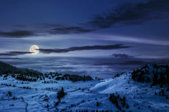 Spruce forest on snowy meadow at night Royalty Free Stock Images