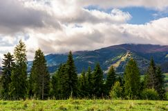 Spruce forest in summer landscape. Spruce forest at the foot of the mountain on a cloudy day. blue sky with clouds in summer landscape Royalty Free Stock Photo