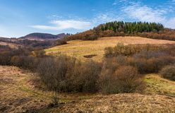 Spruce forest on top of a hill in springtime. Slopes without grass and plants without leaves. early beginning of a warm seasone Royalty Free Stock Photo