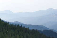 Spruce forest in the Ukrainian Carpathians. Sustainable clear ecosystem Stock Photography