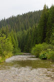Spruce forest in the Ukrainian Carpathians. Sustainable clear ecosystem. Mountain river stock images
